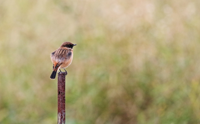 第3回保護鳥獣の親子餌やり(餌やり餌作り)体験