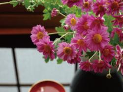 【講座】花としつらい。~重陽の節句~