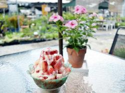 土方洋蘭 いちごカフェ