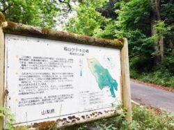 稲山ケヤキの森