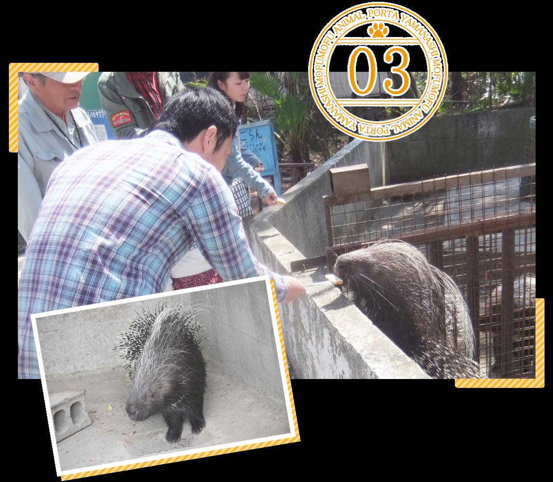 甲府市遊亀公園附属動物園ポイント3