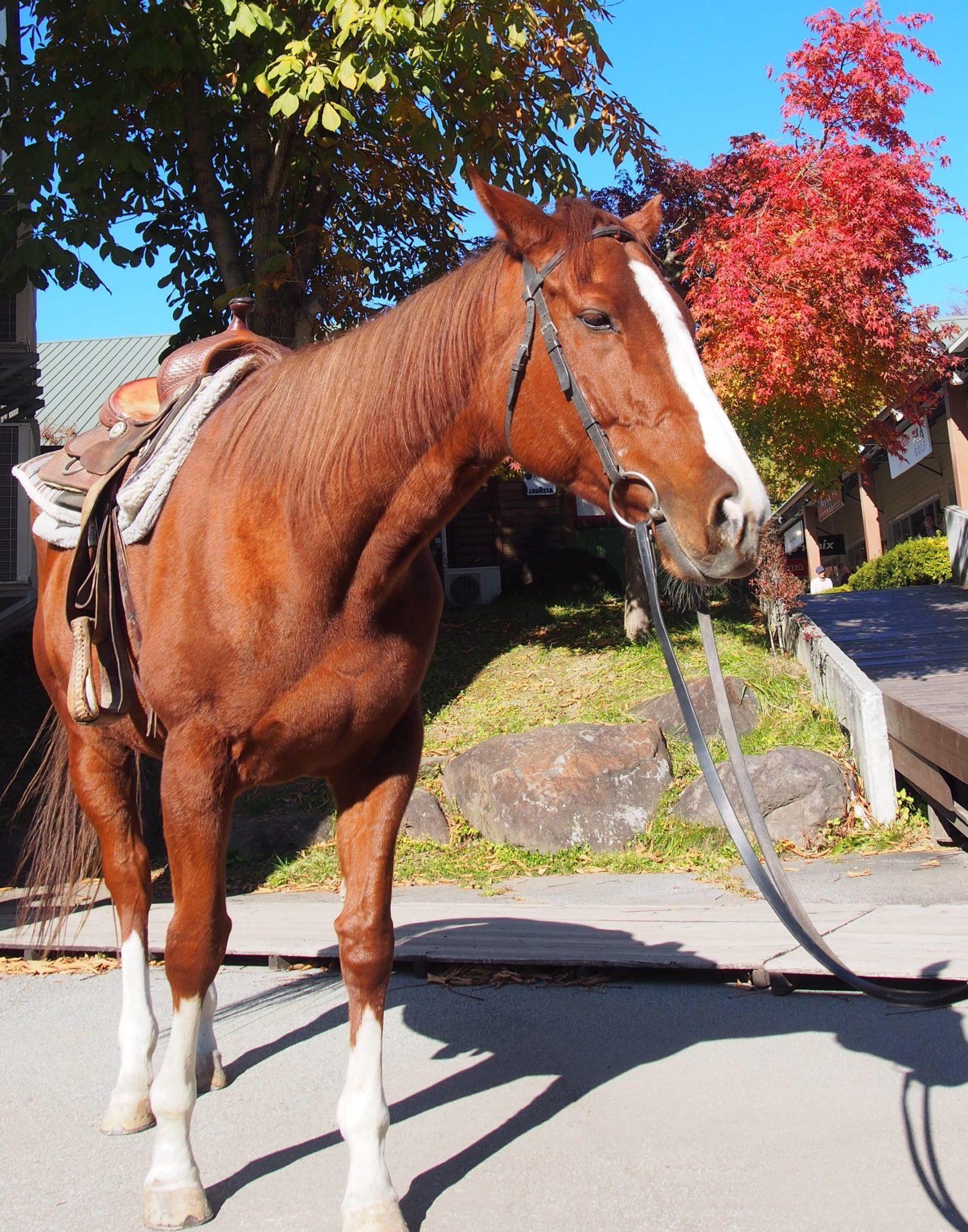秋の引き馬体験