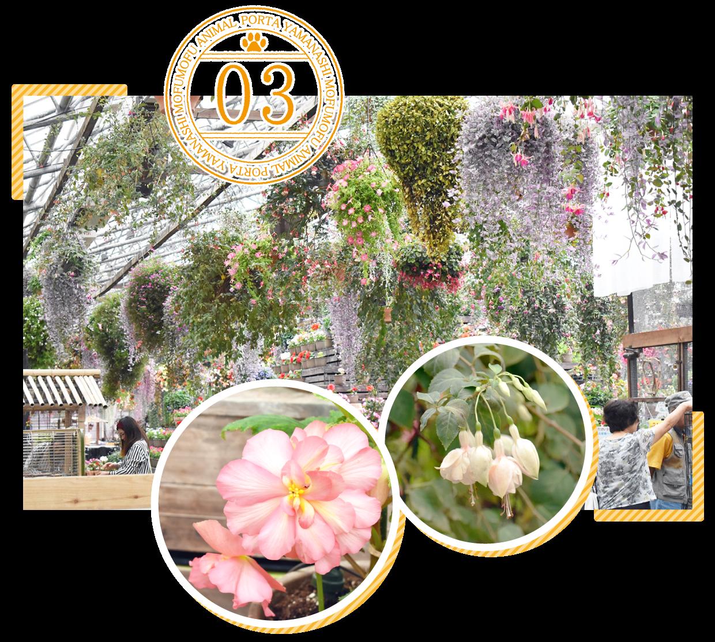 富士花鳥園ポイント3