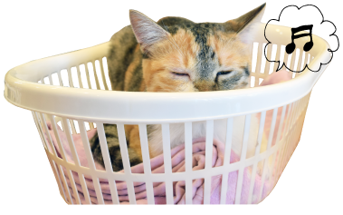 猫カフェハコブネコアイコン