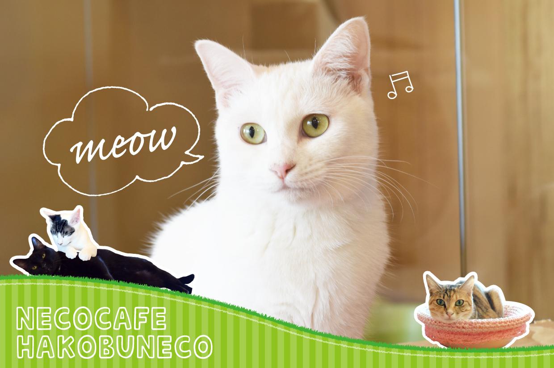 猫カフェハコブネコトップ