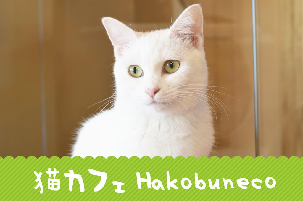 猫カフェ ハコブネコ