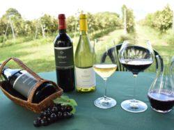 Wine Café  Merle