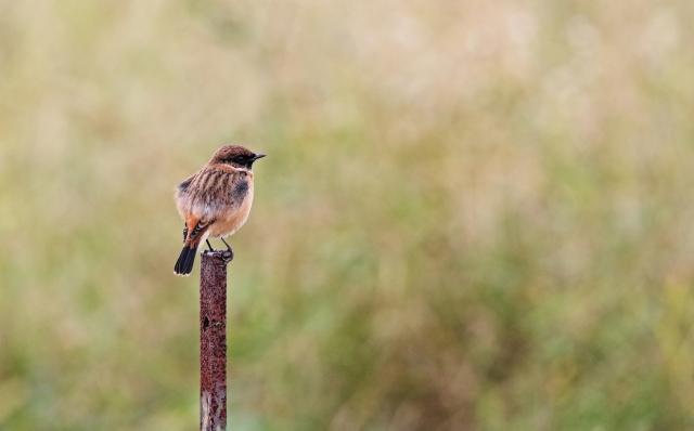野鳥の保護体験教室