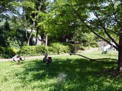 八代浅川砂防公園 笛吹市 公園 5