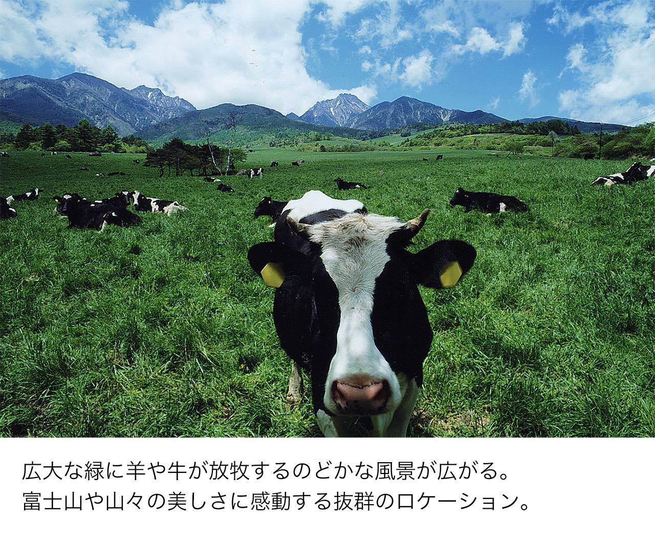 広大な緑に羊や牛が放牧するのどかな風景が広がる。富士山や山々の美しさに感動する抜群のロケーション。