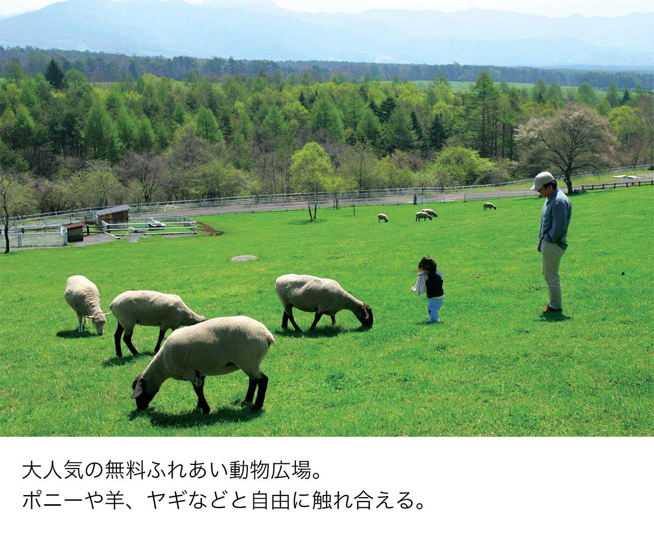 大人気の無料ふれあい動物広場。ポニーや羊、ヤギなどと自由に触れ合える。