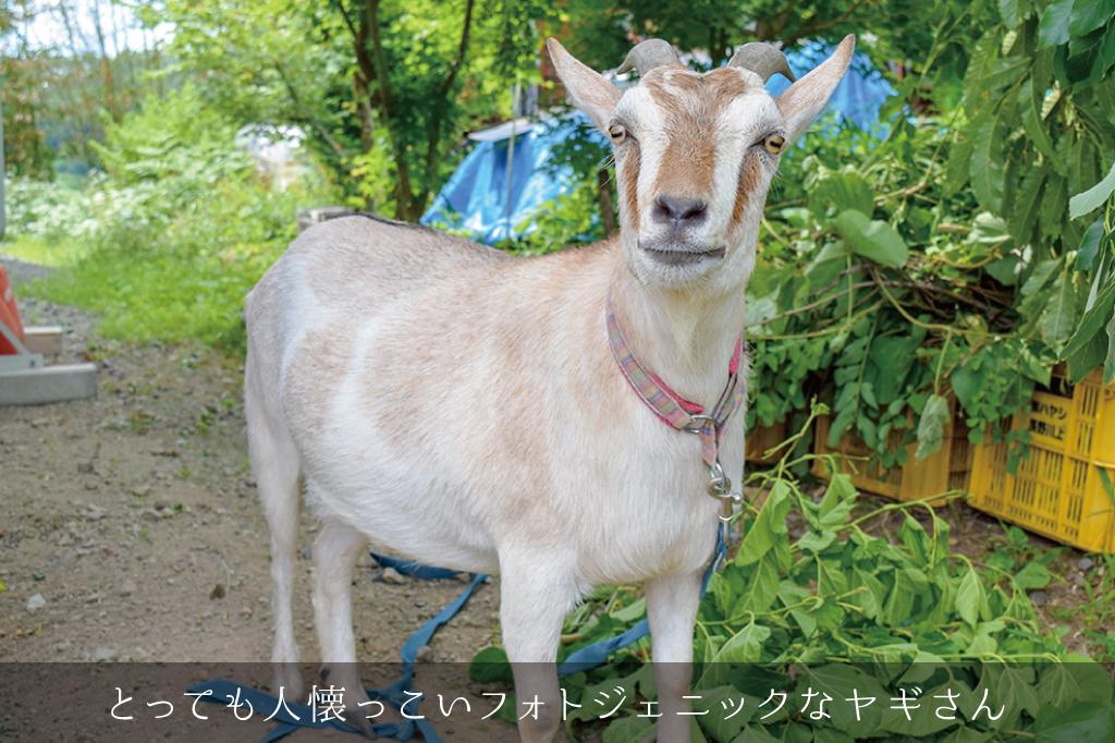 草至庵のフォトギャラリー6