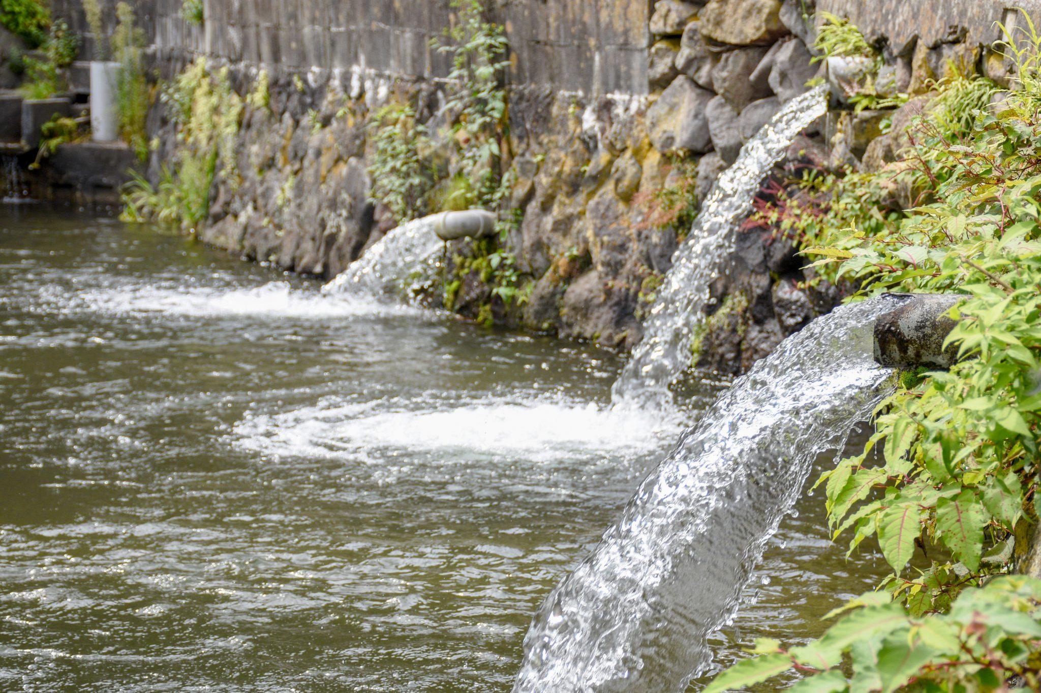 清川釣り堀 甲斐市 遊ぶ学ぶ 5