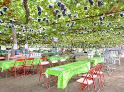 美咲園 笛吹市 観光農園 フルーツ狩り 3