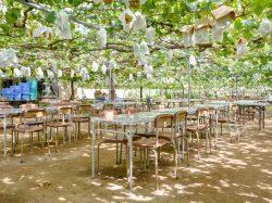 (有)マルサン葡萄酒/若尾果樹園 甲州市 遊ぶ学ぶ 2