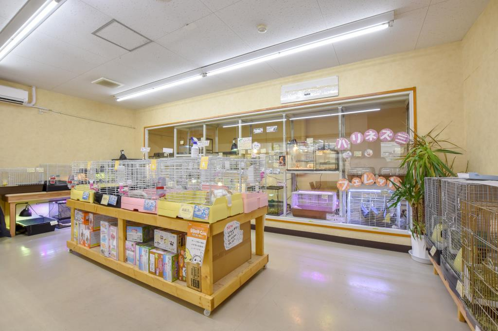 ペットフィールド新平和通り店 甲府市 ショップ 4