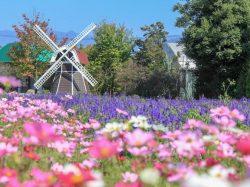 ハーブ庭園 旅日記 勝沼庭園 甲州市 温泉 スパ 5