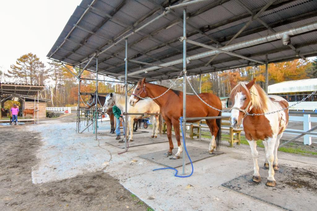 ウエスタン乗馬クラブ パディーフィールド 鳴沢村 レジャー アウトドア 4