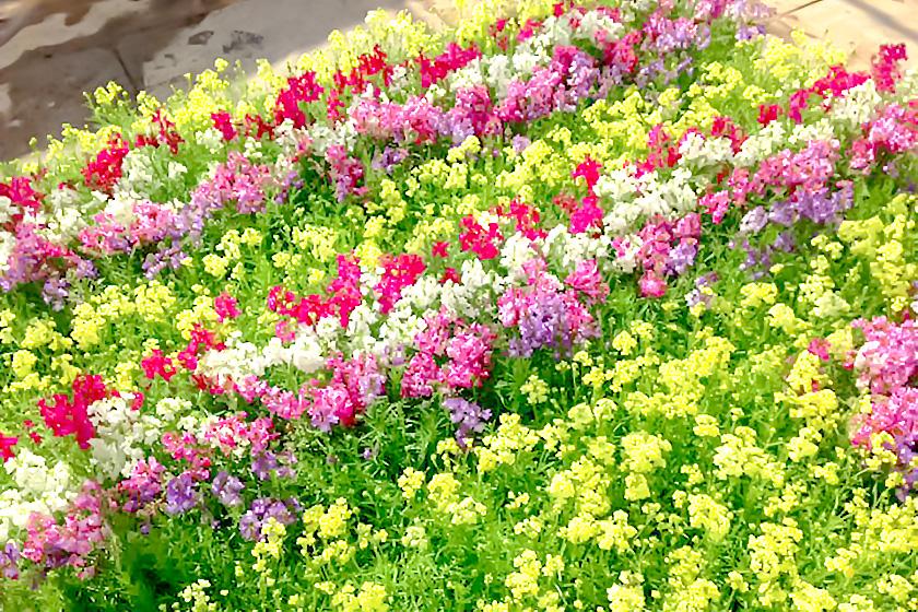 八ヶ岳花の小道 北杜市 ショップ 4