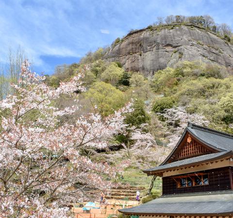 岩殿山の桜