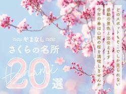山梨の人気お花見スポット2019春~富士山との絶景や夜桜、お祭りまで