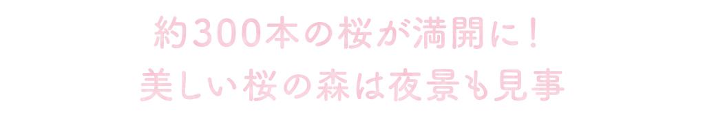 2000年の時を超えた日本三大桜のエドヒガンザクラ