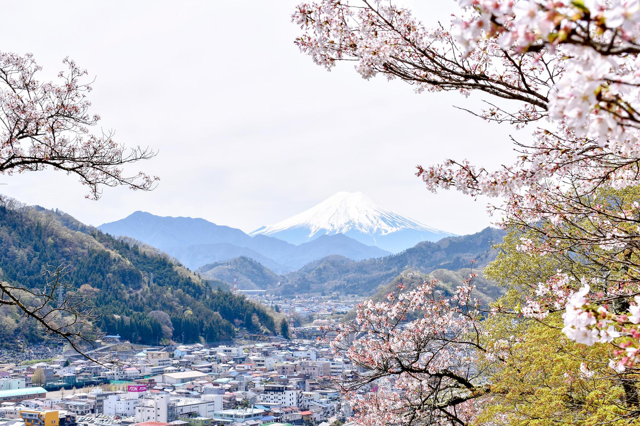 岩殿山の桜 写真2