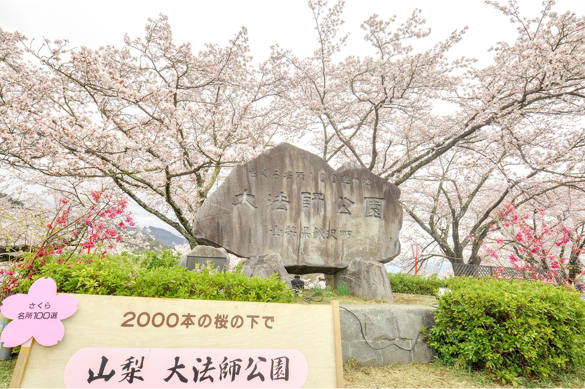 大法師公園の桜 写真1
