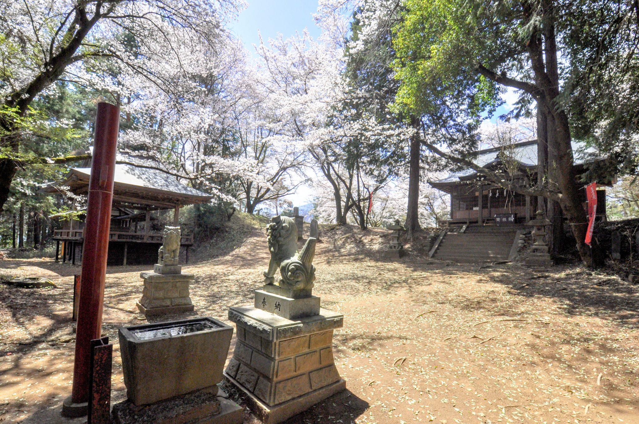 新府城跡の桜 写真2
