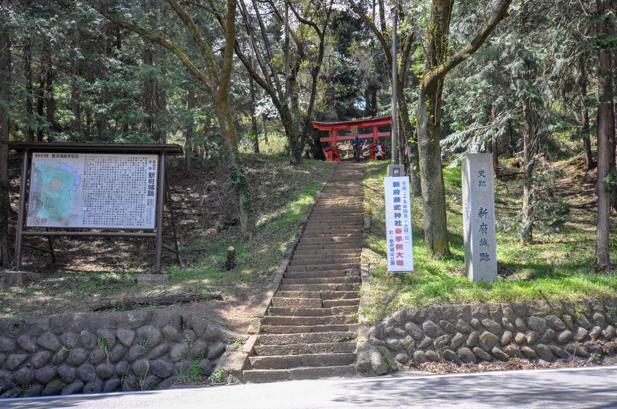 新府城跡の桜 写真5