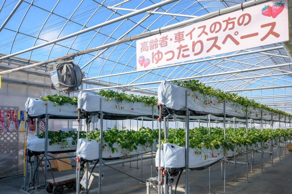 昭和やさい畑いちご園みない 昭和町 観光農園 フルーツ狩り 3