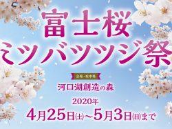 2020河富士桜ミツバツツジまつり
