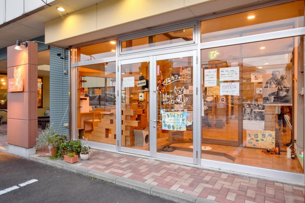 猫カフェ Hako bu neco 昭和町 猫カフェ 1
