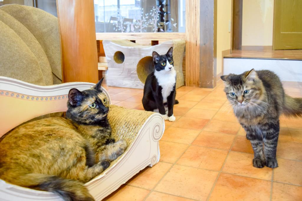 猫カフェ Hako bu neco 昭和町 猫カフェ 3
