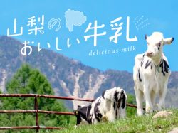 山梨のおいしい牛乳~八ヶ岳・清里&河口湖の人気ソフトクリームも