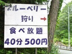ブルーベリー摘み取り体験 大木原地区 鳴沢村 観光農園・フルーツ狩り 1