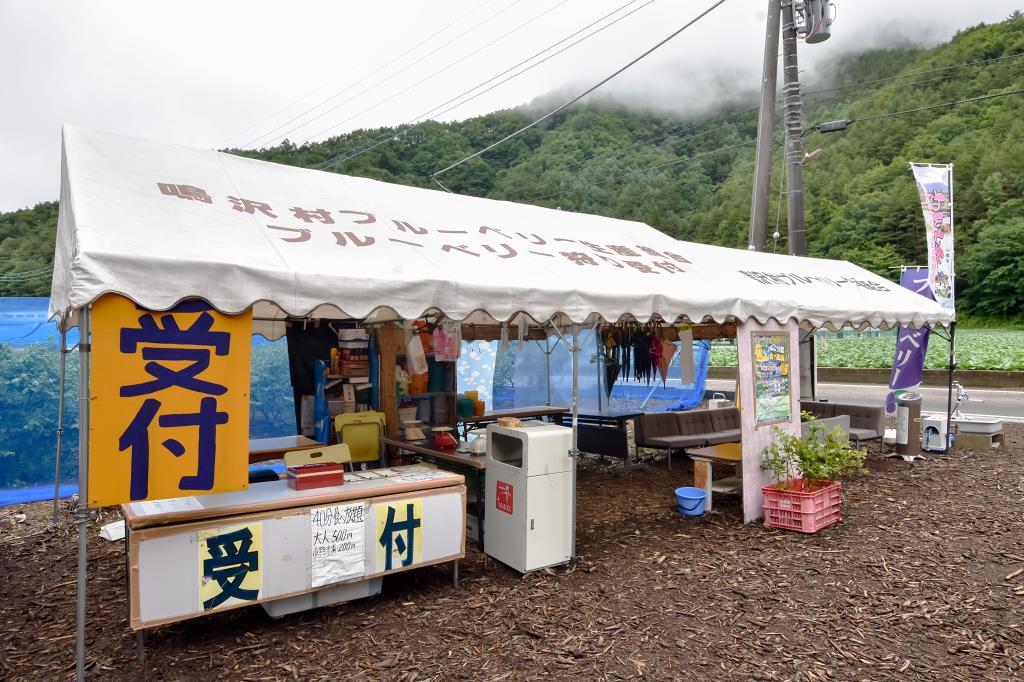 ブルーベリー摘み取り体験 大木原地区 鳴沢村 観光農園・フルーツ狩り 2