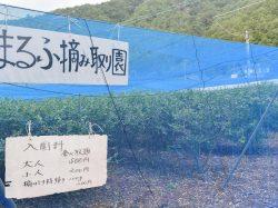 渡辺まるふ摘み取り園 鳴沢村 観光農園・フルーツ狩り 5