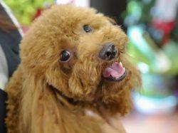 pet salon COCO 昭和町 ペット トリミング 4