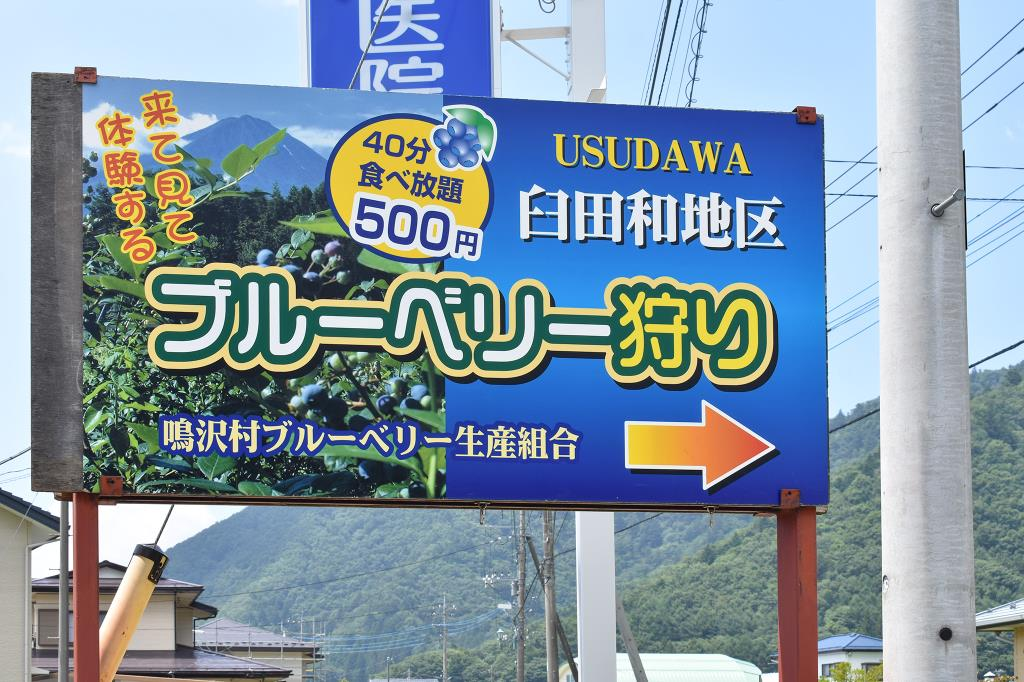 ブルーベリー摘み取り体験 臼田和地区 鳴沢村 観光農園・フルーツ狩り 1