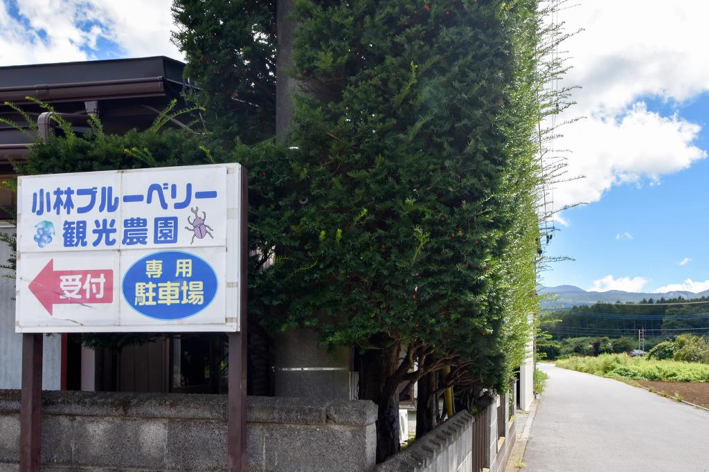 小林ブルーベリー観光農園 鳴沢村 観光農園・フルーツ狩り 1