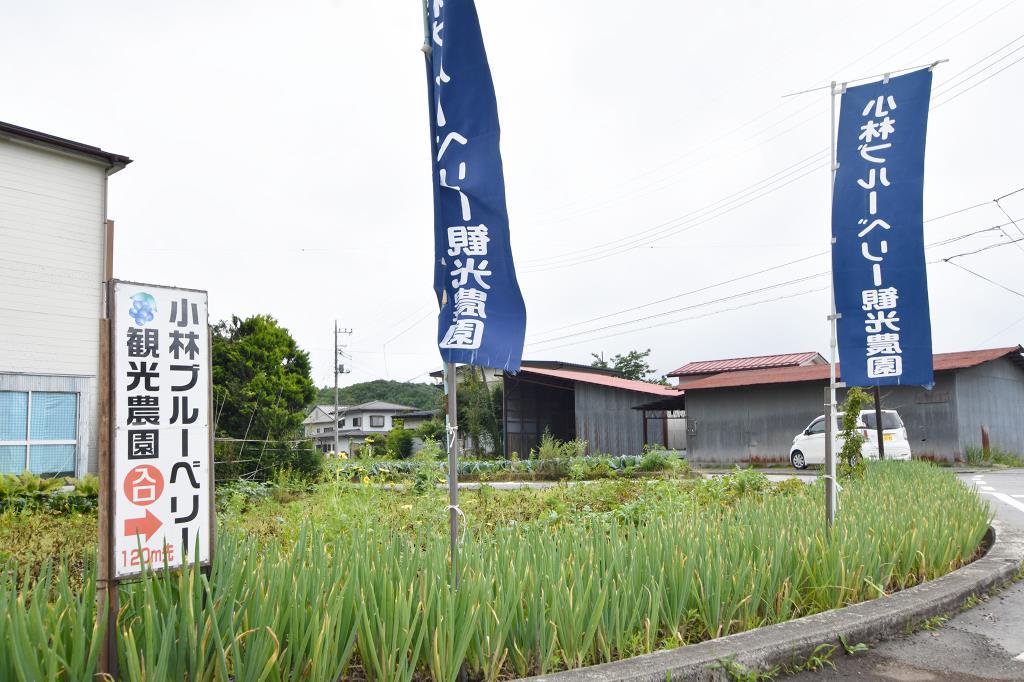小林ブルーベリー観光農園 鳴沢村 観光農園・フルーツ狩り 5