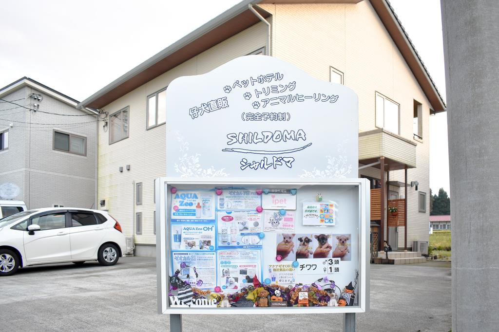 SHILDOMA 富士吉田市 ペット ペットショップ 1