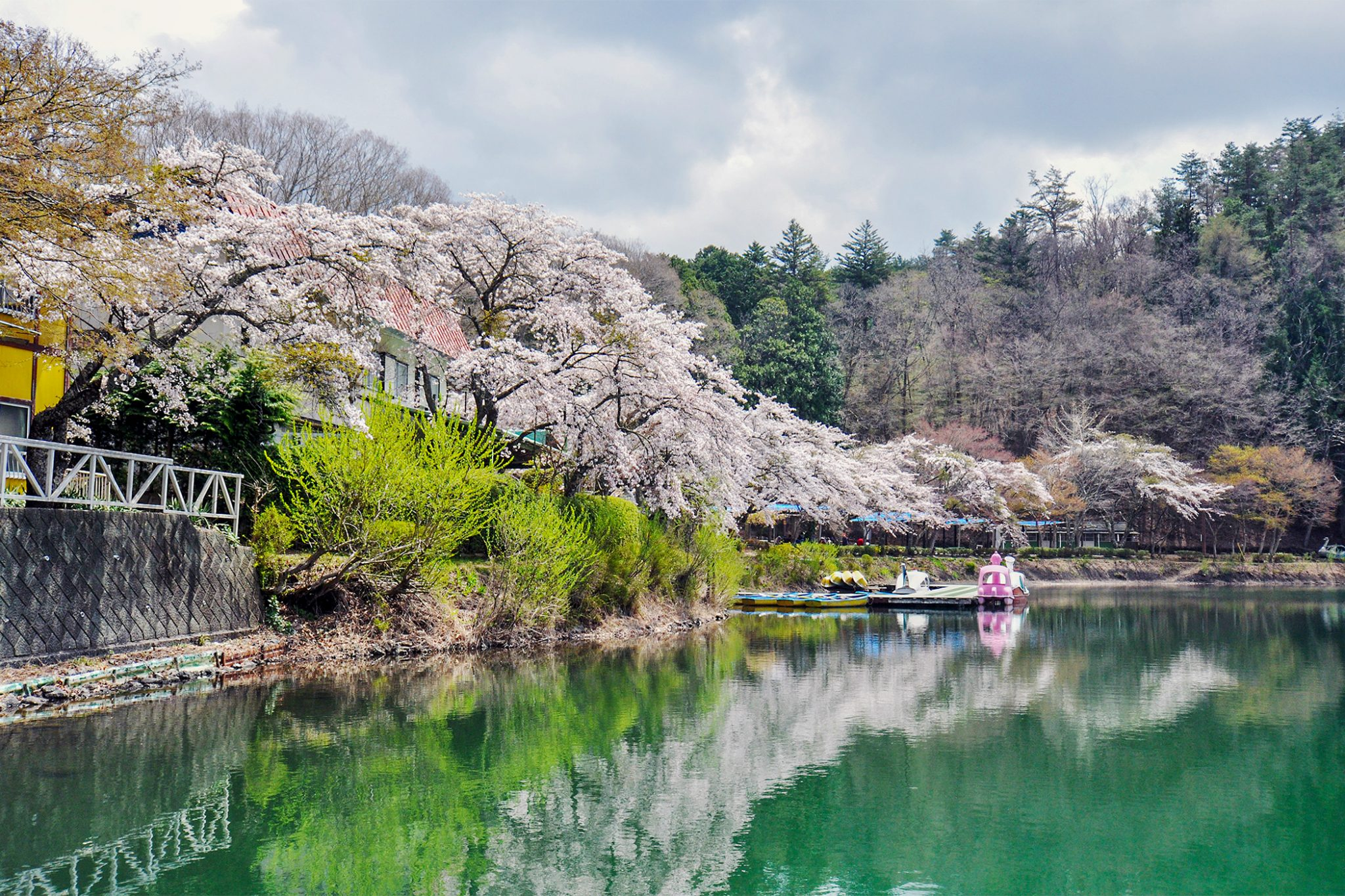 四尾連湖の桜 写真1