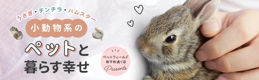 小動物系のペットと暮らす幸せ 〜うさぎ・チンチラ・ハムスター〜ペットフィールド新平和通り店