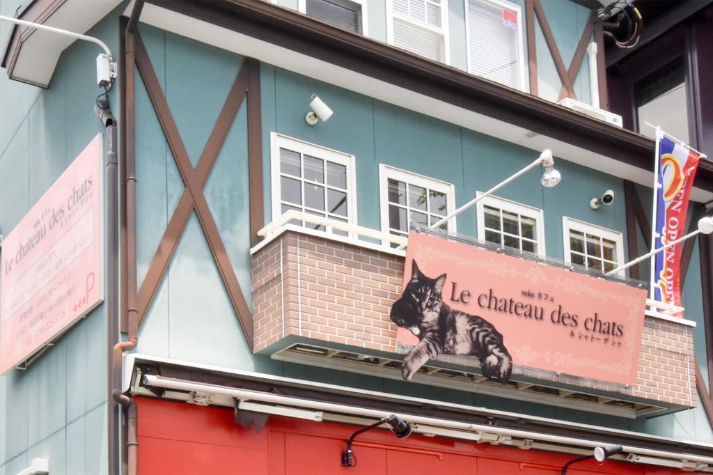 Le chateau des chats 甲府 猫カフェ1
