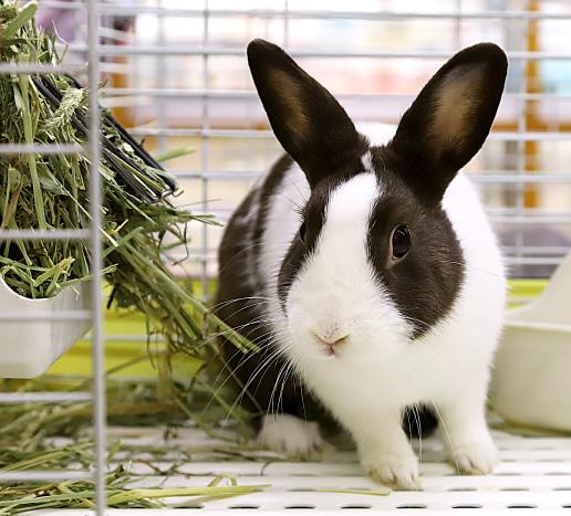 スーパーミニウサギの写真