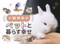 小動物系のペットと暮らす幸せ  ペットフィールド新平和通り店