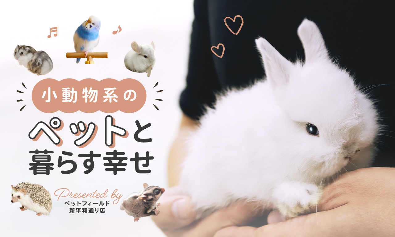 小動物系のペットと暮らす喜び〜うさぎ・チンチラ・ハムスター〜 ペットフィールド新平和通り店