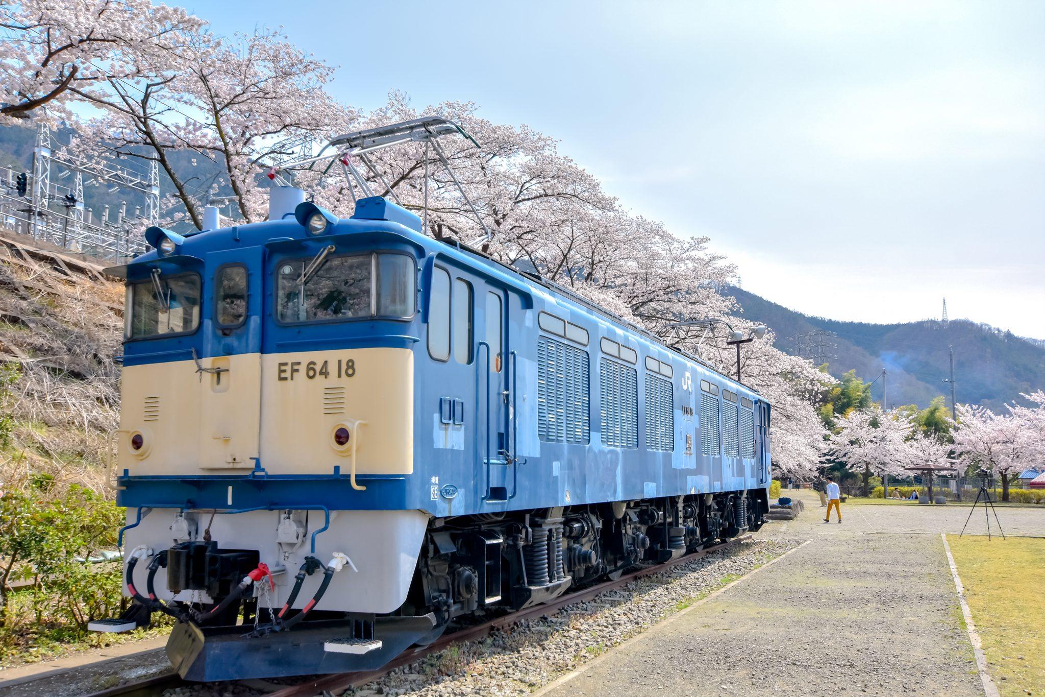 かつぬまぶどう郷駅 甚六桜 写真1